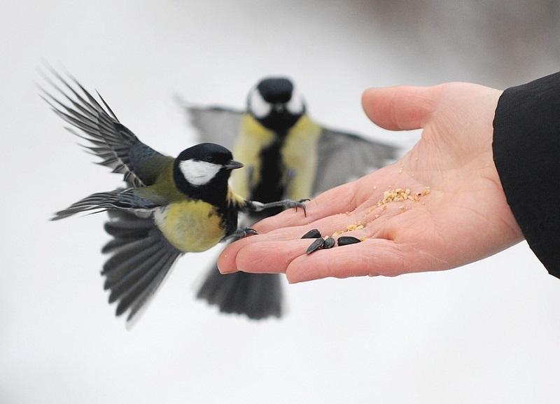 مهربانی و آرامش